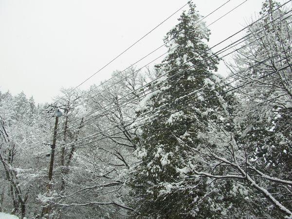 RIMG2643_2997.jpg雪.jpg