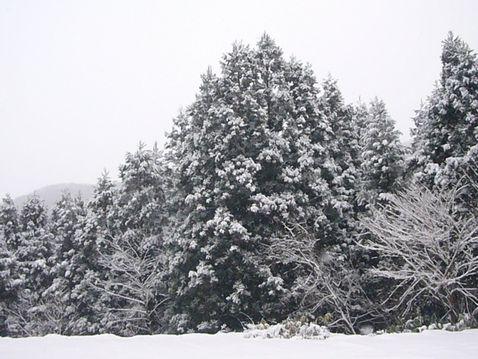 P1030685積雪.jpg